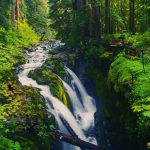 ---forest-waterfall-wallpapers-14875