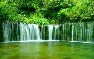 ---green-forest-waterfall-9433