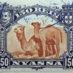 nyassa 150 reis correios portugal 1901 rotlichbraun red brown brun jaune camel stamp