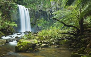 ---rainforest-waterfall-11483