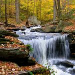 ---waterfall-forest-wallpaper-12844