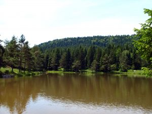 beautifull lake in forest