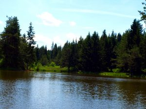 jezero sredi gozda