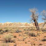 24 02 17 desert landscape5227