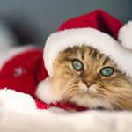 christmas kitty 14054