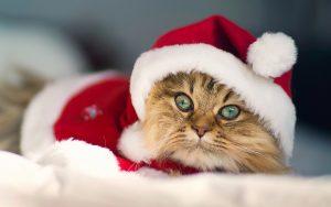 christmas kitty 14054