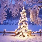 christmas tree wallpapers 7753