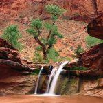 desert stream 8314