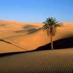 desert wallpapers 940