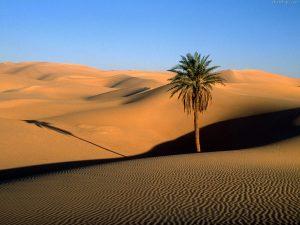 desert wallpapers 940
