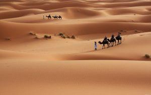sahara desert 11696