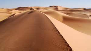 the desert 12439